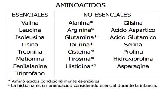Clases De Aminoácidos Que Son Los Aminoacidos